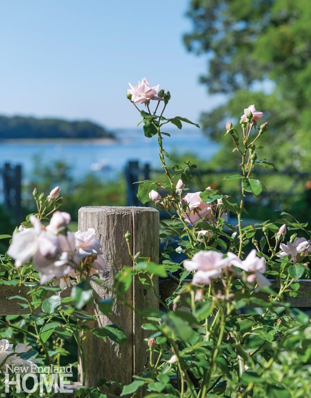 Sustainable Cape Cod Rose Garden